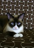 Beautiful cat (2) stock images