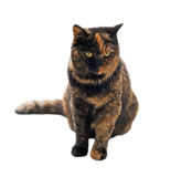 Beautiful cat Royalty Free Stock Photos