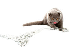 Beautiful cat. On white background Stock Images