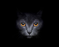 Beautiful Cat Stock Images