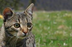 Beautiful cat. Photo of an alert cat Stock Photography