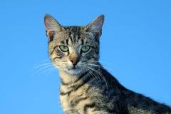 Beautiful Cat. Sitting and watching Royalty Free Stock Photo