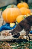 The cat with vegetables stock photo