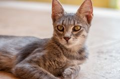 Beautiful cat with big ears. On a bright summer background royalty free stock images