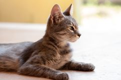 Beautiful cat with big ears. On a bright summer background royalty free stock photography