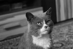 Beautiful cat. Black and white photo.  stock photography