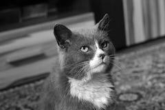 Beautiful cat. Black and white photo.  stock image