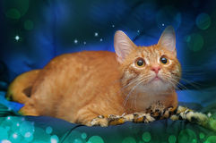 Beautiful cat on a blue background Royalty Free Stock Photography