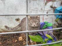 Beautiful cat in cage. Close garden scary scared afraid lonely alone cute pet mammal freedom Stock Images