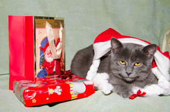 Beautiful cat in christmas hat with gift box Stock Images