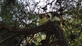 Cat Climbing on Tree in the Forest stock photos