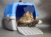 Beautiful cat in a container for transport Stock Photos