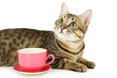 Beautiful cat with cup on white background Royalty Free Stock Photography