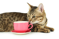 Beautiful cat with cup on white background Royalty Free Stock Image