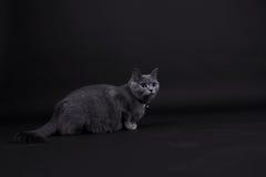Beautiful cat Stock Image