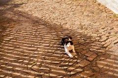 Beautiful cat in Czech Stramberk Stock Image