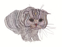 Beautiful cat. Drawn with colored pencils . Expressive eyes . Royalty Free Stock Photo