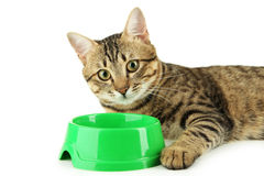 Beautiful cat eating, on white background Stock Photos