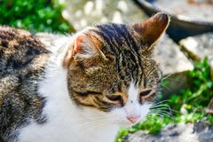 Cat. Beautiful cat  enjoying  the sun against wooden door Stock Photo