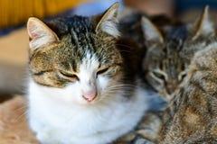Cat. Beautiful cat  enjoying  the sun against wooden door Royalty Free Stock Photos