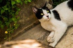 Beautiful cat eyes Royalty Free Stock Images