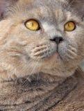 Beautiful cat eyes Stock Images