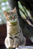 Beautiful cat. Beautiful feral cat photo in nature Stock Photography