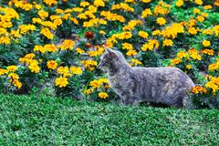 Beautiful cat and flower bed. Summer day stock image