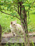 The beautiful cat in the green grass Royalty Free Stock Photo