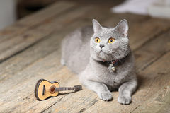 Beautiful cat and a guitar. British Shorthair kitten with orange eyes sitting next to a small guitar Royalty Free Stock Images