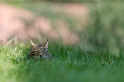 Beautiful cat hiding Stock Images