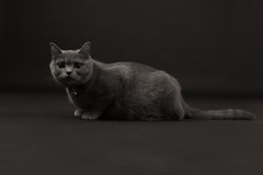 Beautiful cat isolated Stock Image