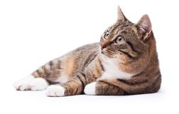 Beautiful cat isolated on a white Royalty Free Stock Images