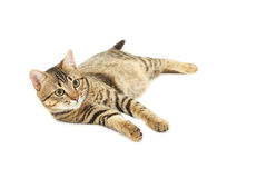 Beautiful cat isolated on white Royalty Free Stock Photography