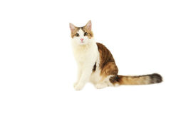 Beautiful cat isolated on white Stock Photos