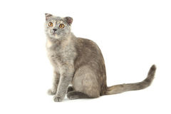 Beautiful cat isolated on white, close up Royalty Free Stock Photos