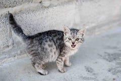 Beautiful cat. kitty Stock Photography