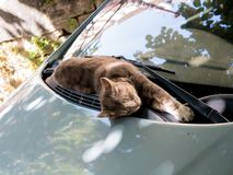 A beautiful cat life. This cat enjoys a ray of sunshine to fall asleep on the hood of a car. Chinon, Centre Val de Loire, France royalty free stock photos