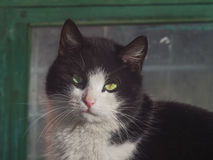 Beautiful cat looking at the camera close up Stock Image