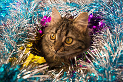 Beautiful cat looking out tinsel. Photo by beautiful cat looking out colorful tinsel Stock Image
