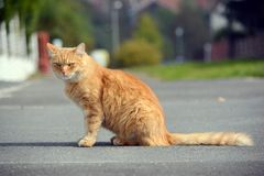 Beautiful cat looks on the street Stock Image