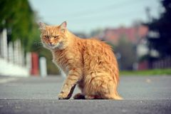 Beautiful cat looks on the street Royalty Free Stock Photo