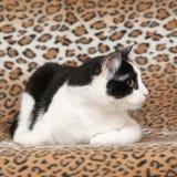 Beautiful cat lying on blanket Stock Photo