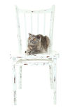 Beautiful cat lying on a chair, isolated on white Royalty Free Stock Photos