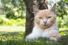 Beautiful cat lying in the grass hiding from the summer heat in Stock Photo