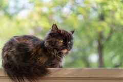 Beautiful cat lying on a wooden crossbar. Blurred background. Close up.  stock photo