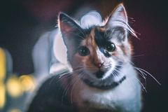 Beautiful cat in the morning. royalty free stock photo