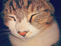 Beautiful cat. This is my amazing feline pet named Bob Royalty Free Stock Images