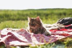 Beautiful cat on nature Stock Photos