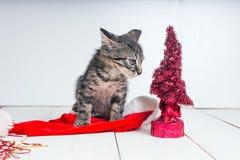Beautiful cat near Christmas tree Stock Image
